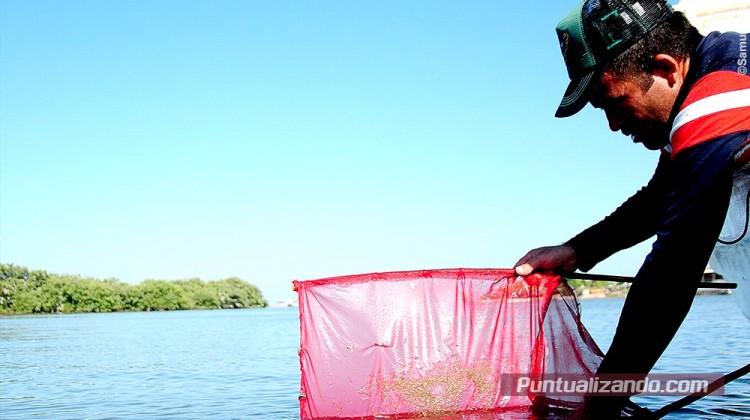 Pesca, camaron, larva, costa azul, la reforma