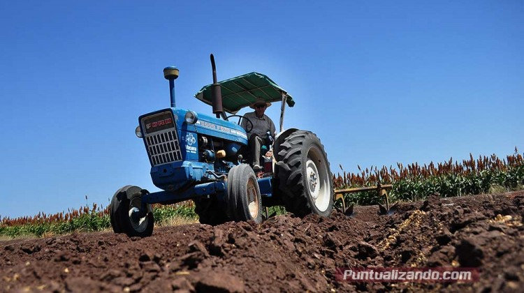 sagarpa- agricultores, granos,